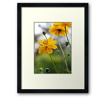 April Sun Framed Print