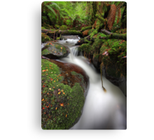 Paradise Gully - Cement Creek Canvas Print