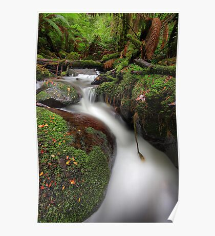 Paradise Gully - Cement Creek Poster