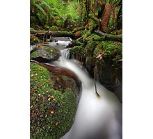 Paradise Gully - Cement Creek Photographic Print