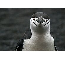 Chinstrap Penguin - Antarctica Photographic Print