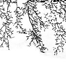 Japanese Maple in the Snow by cclaude