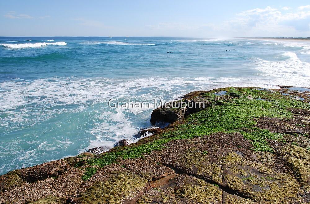 Green seaweed by Graham Mewburn
