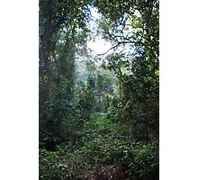 Harrington Rainforest Photographic Print