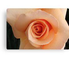 irresistible rose Canvas Print