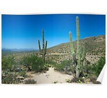Desert Pair Poster