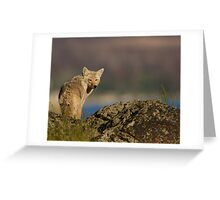 Coyote Looking Over Shoulder Greeting Card