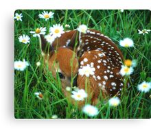 Fawn & Wildflowers Canvas Print