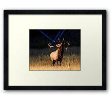 Charging at Sunrise Framed Print