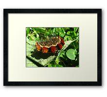 Fantastic Caterpillar Curled Up Framed Print