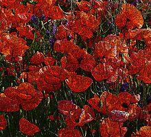 Red Poppies, abstract art, red flowers, wall art, home decor by artbykatsy