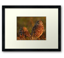 Burrowing Owl Couple at Sunset Framed Print