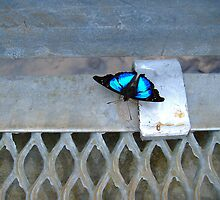 Butterfly by Tamara Travers