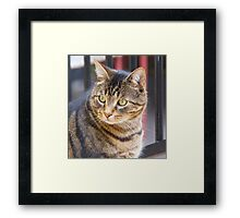Jimmy, My Cat, Australia. Framed Print