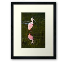 Beautiful and Bizarre Roseate Spoonbill Framed Print