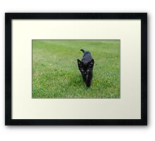On the hunt...  Framed Print
