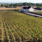 Fields Of Burgundy by phil decocco