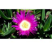 Gorgeous flower. Photographic Print