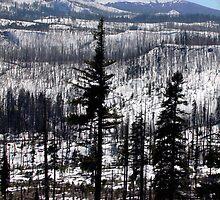 Mount Washington, Oregon by WaterInMotion