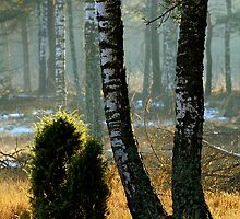 In winter sunshine by renifer