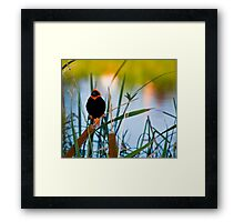 Southern Red Bishop at the Dam Framed Print