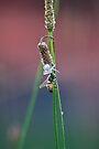 Honeybee Becomes Spider Food by RatManDude