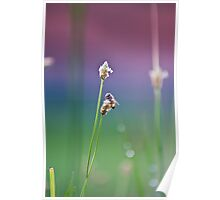 Honeybee Collecting Nectar Poster