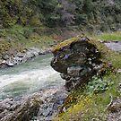 The Rock by heathernicole00