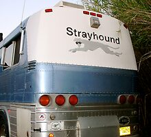 Go Strayhound by doctorharrison