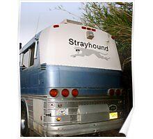 Go Strayhound Poster