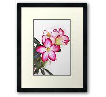 Desert Rose-8959 Framed Print