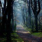 Kampinoski National Park in Poland by renifer