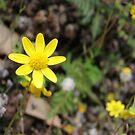 Yellow :) by heathernicole00