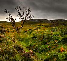 Lone Tree, Isle of Skye by Thomas Peter