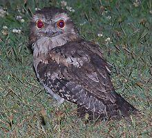 Owl by Graham Mewburn