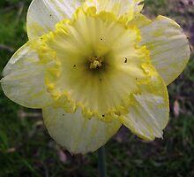 Yellow/White Mix by tonymm6491