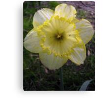 Yellow/White Mix Canvas Print