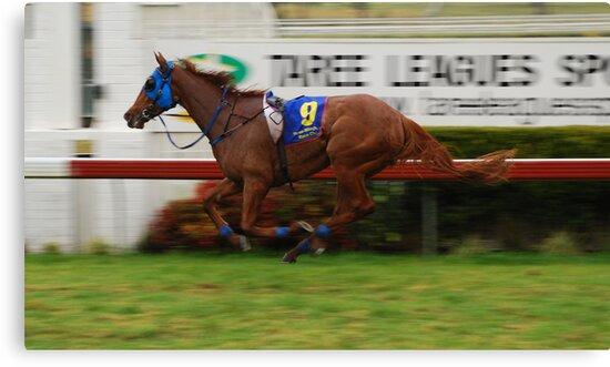Riderless Horse by Graham Mewburn
