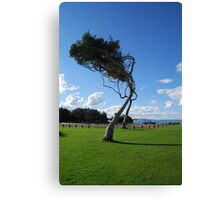 Saltwater Tree Canvas Print
