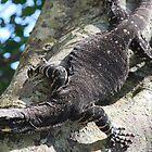 Tree Climbing by Graham Mewburn