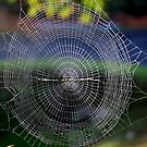 The almost perfect Spider web  by robmac