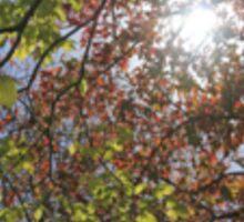 Autumn sunlight Sticker