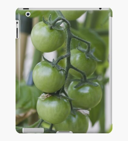 tomatoes in the garden iPad Case/Skin
