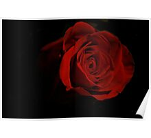 One Red Rose Poster