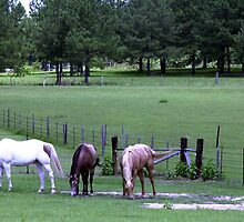 Georgia horses by Larry  Grayam