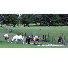 Georgia horses Photographic Print