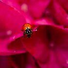 Ladybug on Flower by DavidBerry
