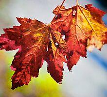 Autumn Amber by Chris B.