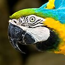 Blue &amp; Gold Macaw by Shannon Beauford
