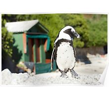 Penguin Shack Cape Town Poster